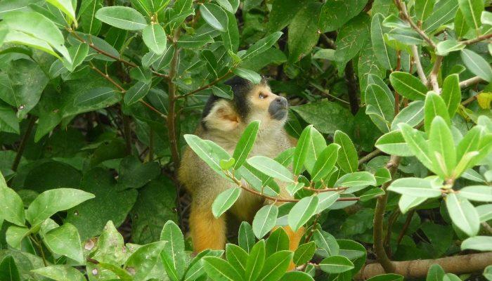 Inmersión en la fascinante Amazonia Boliviana