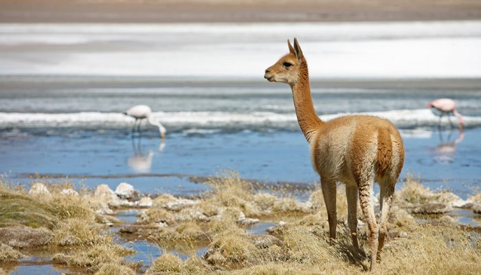 SILOLI'S DESERT - 1001 LAGOONS - SAN PEDRO DE QUEMEZ (3700M/12139FT)