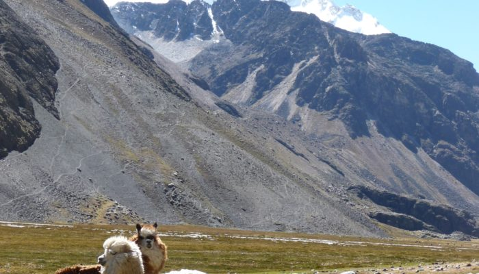 BASE CAMP CHACHACOMANI (4470 m.a.s.l./ 14 665 feet) - CRUZ PAMPA (4420 m.a.s.l./ 14 501 feet) - LA PAZ  (3600 m.a.s.l./ 11 811 feet)