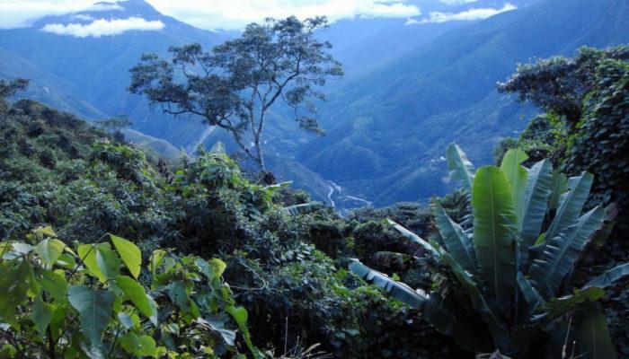 LAS CASCADAS - FARNIENTE - LA PAZ (3600 m a.s.l./11,811 ft)