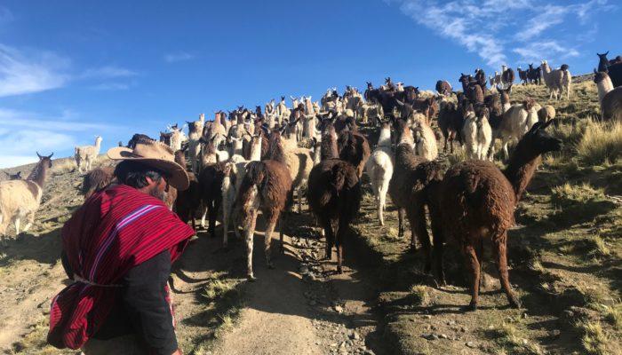 TUNI / DAY WITHIN THE COMMUNITY - LA PAZ (3600 m a.s.l./11,811 ft)